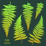 Hojas dibujadas mano verde fresca del helecho aisladas en fondo oscuro Fotos de archivo