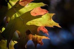 Hojas durante temporada de otoño en un fondo borroso Fotos de archivo