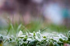 Hojas e hierba escarchadas fotografía de archivo libre de regalías