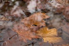 Hojas en agua Fotos de archivo