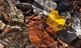 Hojas en agua en otoño imagen de archivo