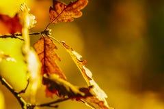Hojas en bosque del otoño Fotografía de archivo libre de regalías