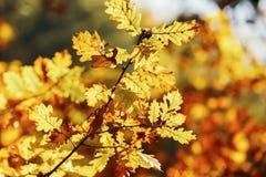 Hojas en bosque del otoño Fotos de archivo