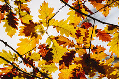 Hojas en bosque del otoño Imágenes de archivo libres de regalías