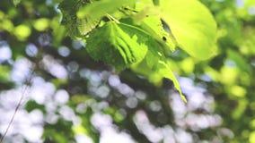 Hojas en bosque y viento metrajes