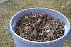 Hojas en bote de basura Imagen de archivo libre de regalías