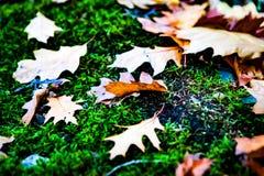 Hojas en colores hermosos Foto de archivo libre de regalías