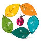 Hojas en círculo con el insecto de la mariquita Fotos de archivo libres de regalías