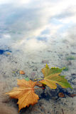 Hojas en el agua Imagen de archivo libre de regalías