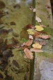 Hojas en el agua Fotografía de archivo