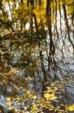 Hojas en el agua del lago, reflexión Imagen de archivo libre de regalías