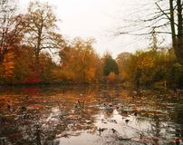 Hojas en el agua en parque otoñal de la escultura de Yorkshire imagenes de archivo