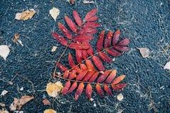 Hojas en el asfalto mojado imágenes de archivo libres de regalías
