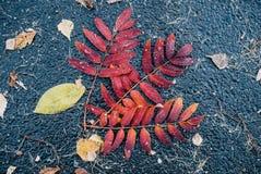 Hojas en el asfalto mojado imagenes de archivo