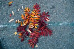 Hojas en el asfalto mojado imagen de archivo