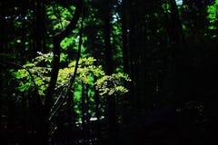 Hojas en el bosque imagenes de archivo