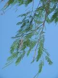 Hojas en el cielo Imagen de archivo libre de regalías