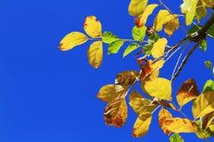 Hojas en el cielo azul Imagen de archivo
