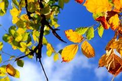 Hojas en el cielo azul Imágenes de archivo libres de regalías