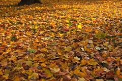 Hojas en el parque en otoño. Fotos de archivo libres de regalías