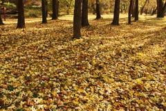 Hojas en el suelo de un parque Imagen de archivo libre de regalías