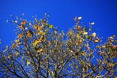 Hojas en fondo del cielo azul Fotos de archivo libres de regalías