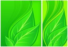 Hojas en fondo verde Imagen de archivo
