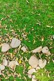 Hojas en hierba verde Fotos de archivo