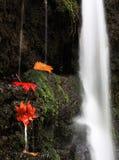 Hojas en la cascada 3 Imagen de archivo