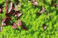 Hojas en la hierba Fotografía de archivo