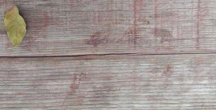 Hojas en la madera vieja imagen de archivo