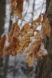 Hojas en la nieve Imagenes de archivo