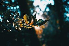 Hojas en la oscuridad de un bosque iluminado por un rayo del sol foto de archivo