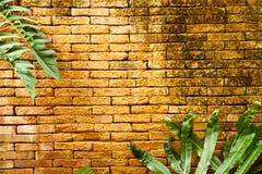 Hojas en la pared de ladrillo Fotos de archivo