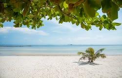 Hojas en la playa fotos de archivo