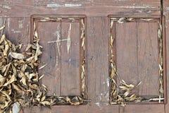 Hojas en la puerta Fotografía de archivo