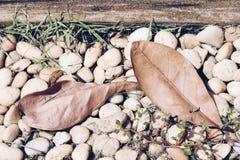 Hojas en la roca fotos de archivo