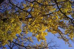 Hojas en los árboles Fotos de archivo