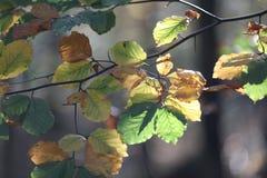 Hojas en luz del sol Imagen de archivo libre de regalías
