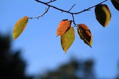 Hojas en otoño Imágenes de archivo libres de regalías