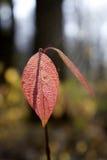 Hojas en otoño Foto de archivo libre de regalías
