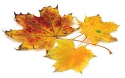 Hojas en otoño   Imagen de archivo libre de regalías