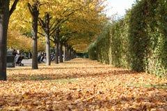 Hojas en otoño Fotografía de archivo libre de regalías