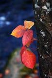 Hojas en otoño Fotografía de archivo