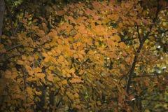 Hojas en otoño Fotos de archivo