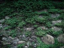 Hojas en rocas imagen de archivo
