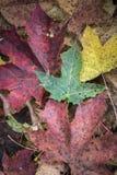 Hojas en sombras del otoño Foto de archivo libre de regalías