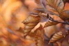 Hojas en un árbol en otoño fotografía de archivo