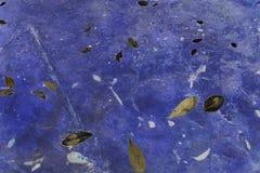 Hojas en un fondo azul Fotografía de archivo libre de regalías