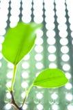 Hojas en un fondo LED Fotografía de archivo libre de regalías